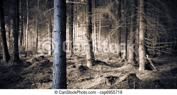 Spooky forest - csp6955719