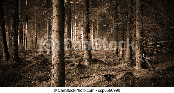 Spooky forest - csp6560990
