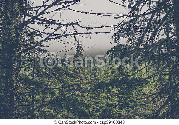 Spooky forest with pine trees - csp39160343