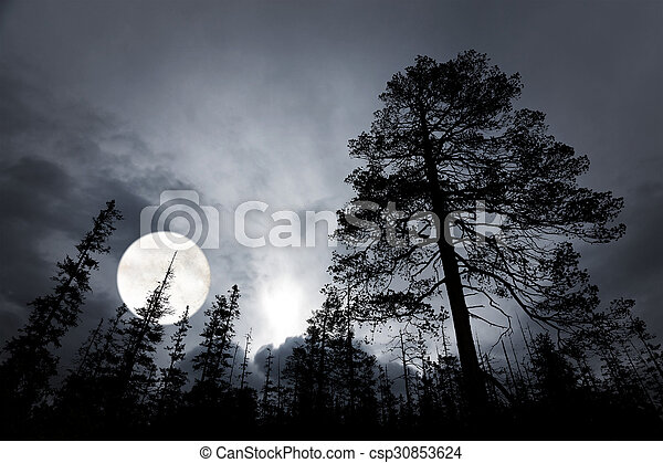 spooky forest with silhouettes of trees - csp30853624