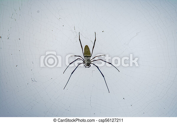 Spooky spider on the web - csp56127211