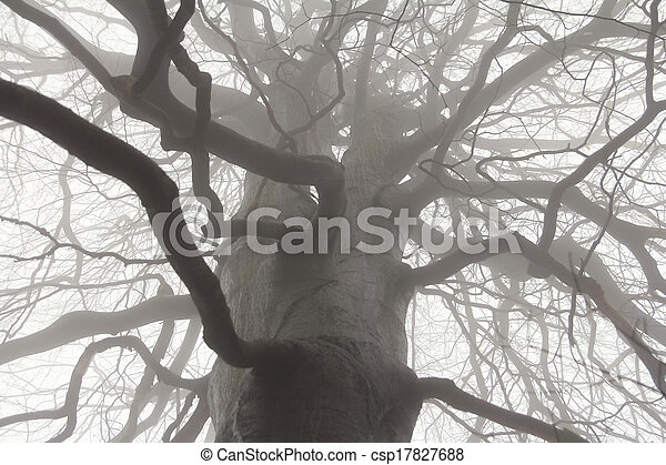 spooky tree branches pictures search photographs and photo clip