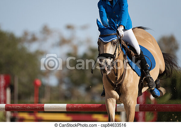 Sport horse jumping over a barrier on a obstacle - csp84633516