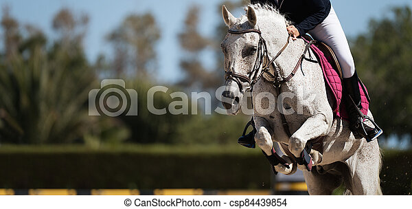 Sport horse jumping over a barrier on a obstacle course - csp84439854