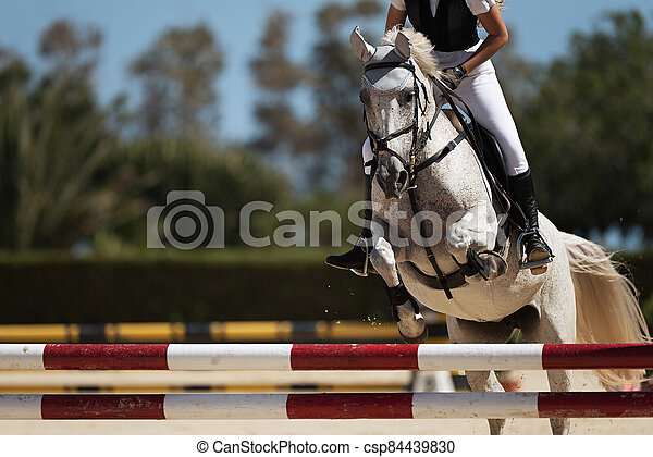 Sport horse jumping over a barrier on a obstacle course - csp84439830