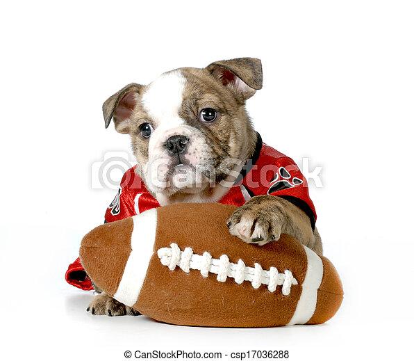 sports hound - csp17036288