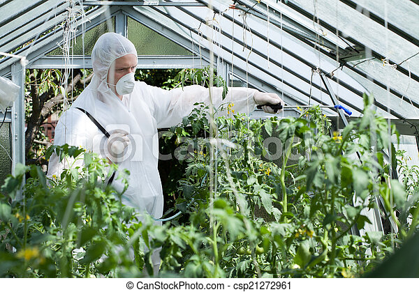 Spraying plants in greenhouse - csp21272961