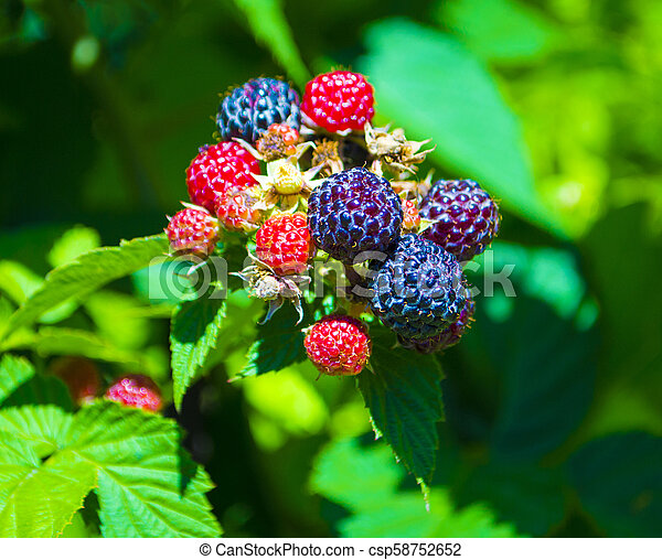 sprig with berries and a sprig of flowers strawberries - csp58752652