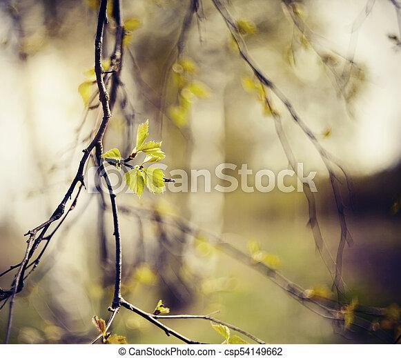 spring., àppearing, feuilles, branches, bouleau - csp54149662