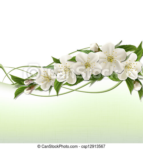 Spring background with white cherry flowers - csp12913567