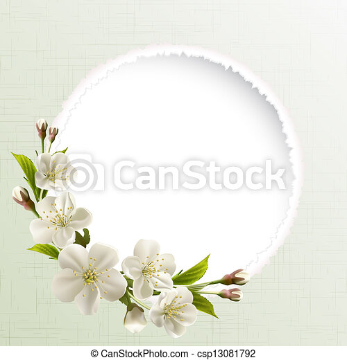 Spring background with white cherry flowers - csp13081792