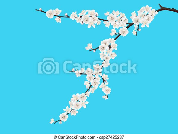 Spring blooming cherry branch - csp27425237