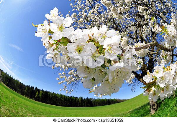 Spring blossoms - csp13651059