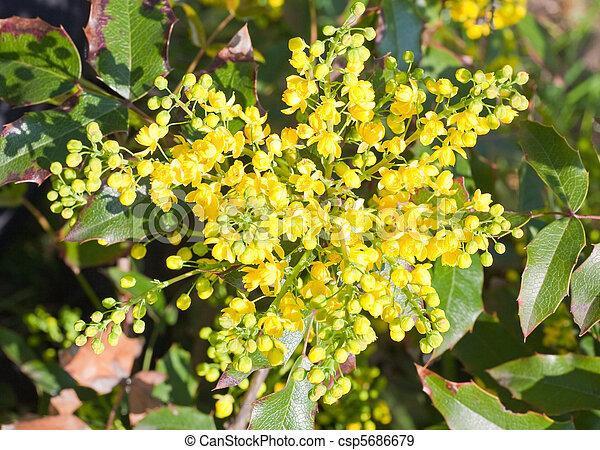 Spring bush with yellow flowers beautiful spring plant with yellow spring bush with yellow flowers csp5686679 mightylinksfo