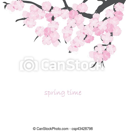 Spring card with cherry branch - csp43428798