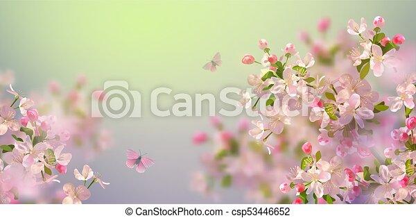 Spring Cherry Blossom - csp53446652