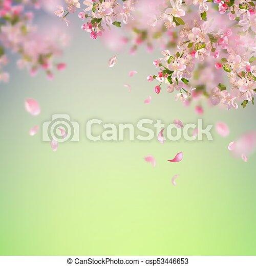 Spring Cherry Blossom - csp53446653