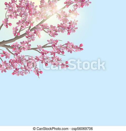 Spring cherry blossom - csp56069706