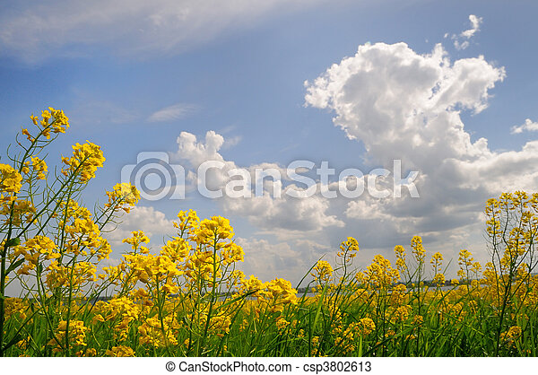 spring field with wild flowers - csp3802613