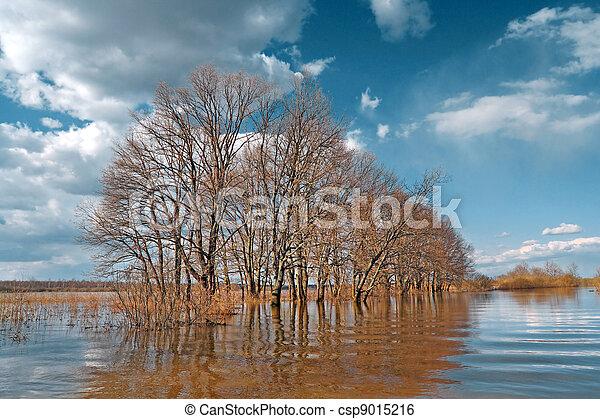 spring flood in oak wood - csp9015216
