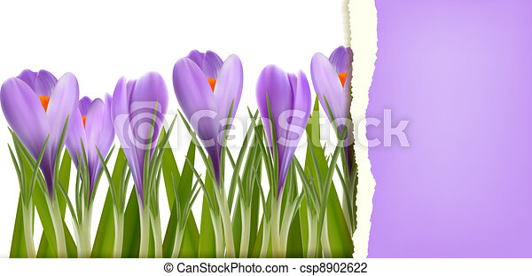 Spring flower background - csp8902622