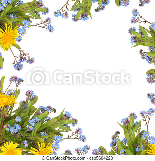 Spring flower border dandelion and forget me knot flowers forming spring flower border csp5604220 mightylinksfo