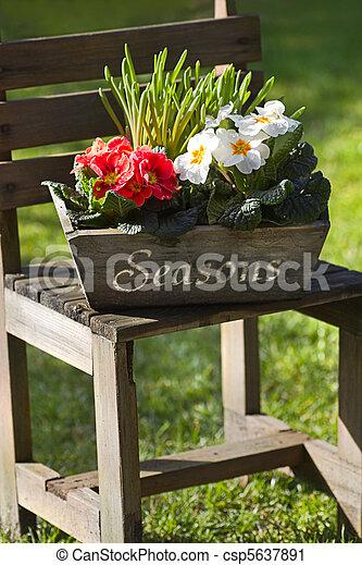 Spring flower decoration in garden with primroses - csp5637891