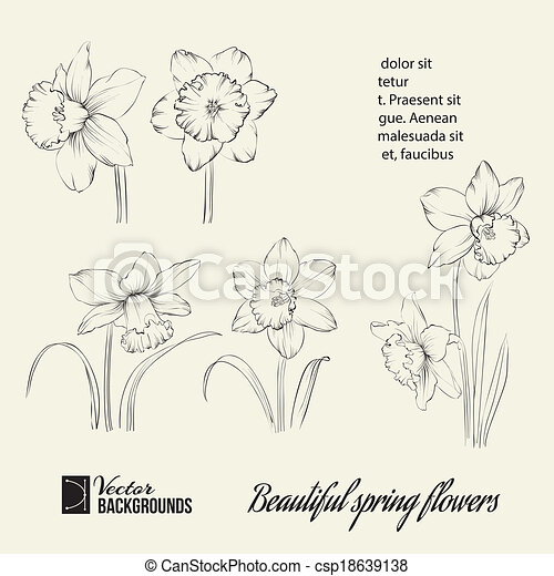 Spring flower set. - csp18639138