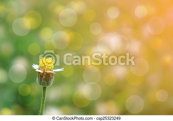 spring flower - csp25323249