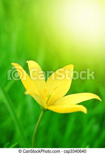 Spring Flower - csp3340640