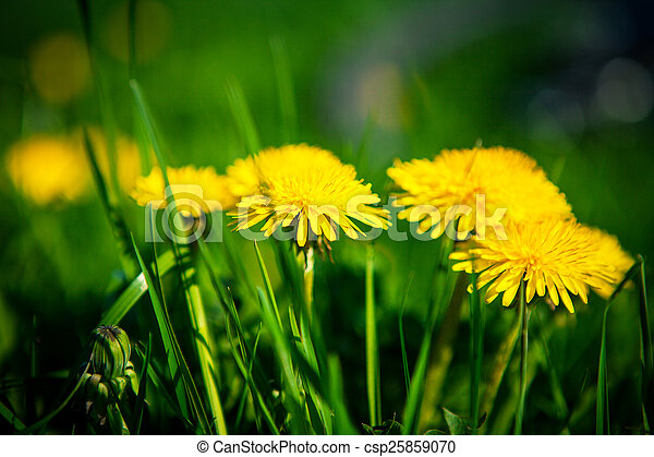 spring flowers background - csp25859070
