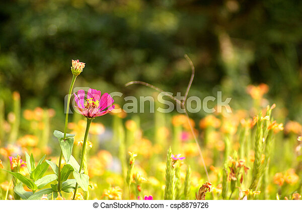 Spring flowers background - csp8879726