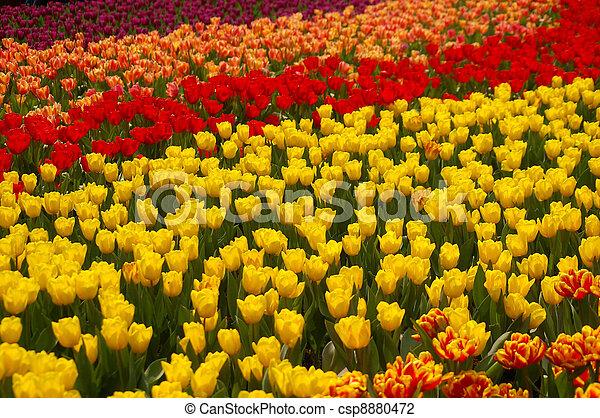 Spring flowers background - csp8880472