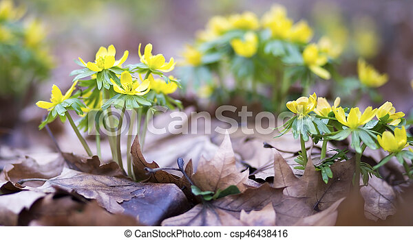 Spring Flowers Banner Beautiful Spring Flowers Website Banner Of