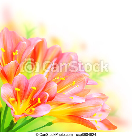Fresh spring flowers border isolated on white background stock spring flowers border csp8604824 mightylinksfo