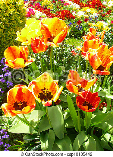 Spring flowers in a meadow - csp10105442