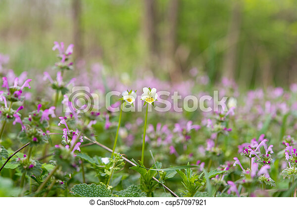 spring flowers in a meadow - csp57097921