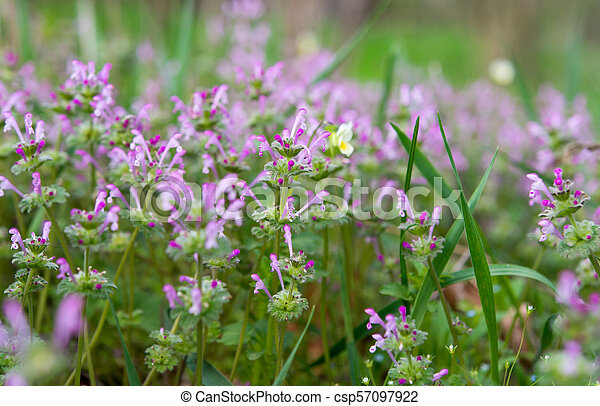 spring flowers in a meadow - csp57097922