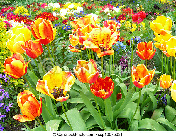 Spring flowers in a meadow - csp10075031
