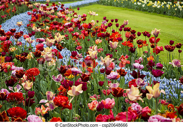 Spring flowers in a park - csp20648666