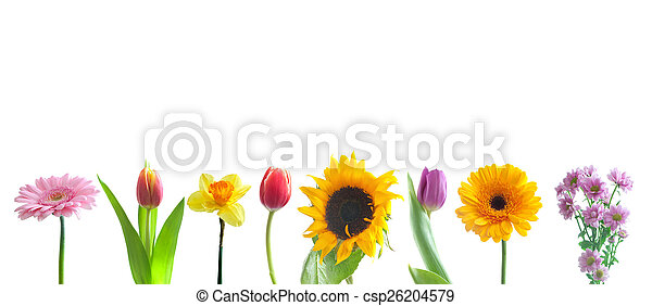 Spring flowers in a row spring flowers border over a white spring flowers in a row csp26204579 mightylinksfo