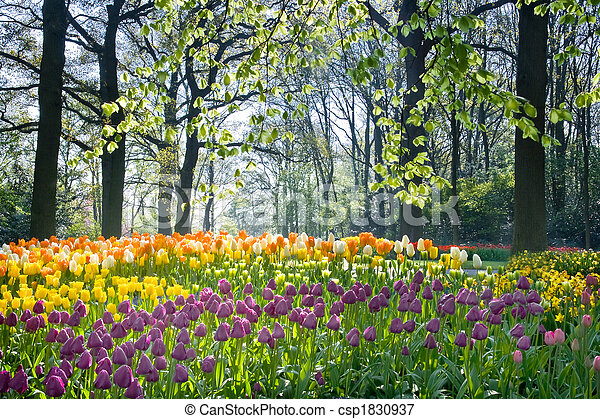 Spring flowers in april light - csp1830937