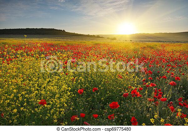 Spring flowers in meadow. - csp69775480
