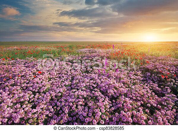 Spring flowers  in meadow. - csp83828585