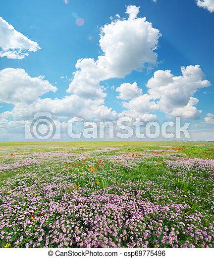Spring flowers in meadow. - csp69775496