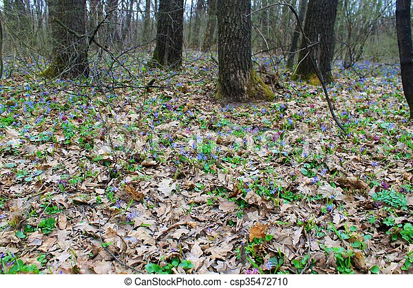Spring flowers in the forest - csp35472710