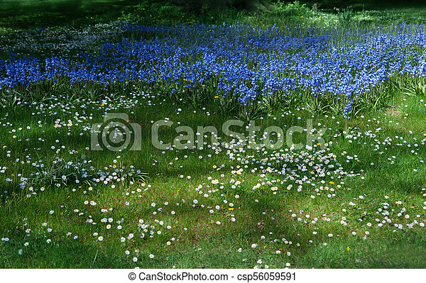 Spring flowers in the forest - csp56059591