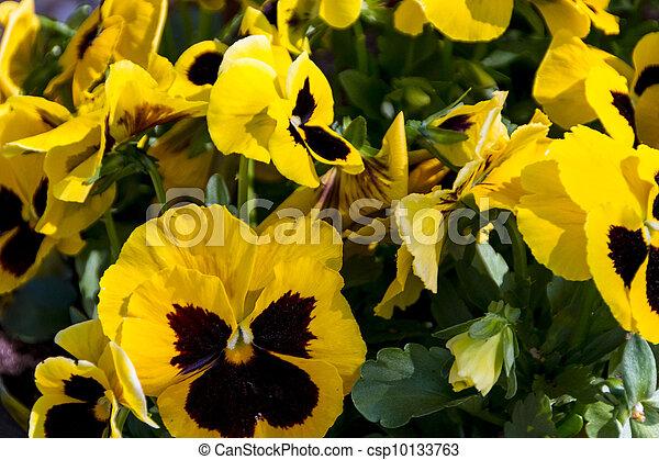 Spring flowers in the garden beautiful spring or easter scene with spring flowers in the garden beautiful spring or easter scene with potted pansies csp10133763 mightylinksfo