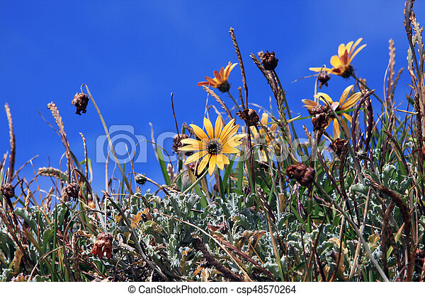 Spring flowers in the meadow - csp48570264