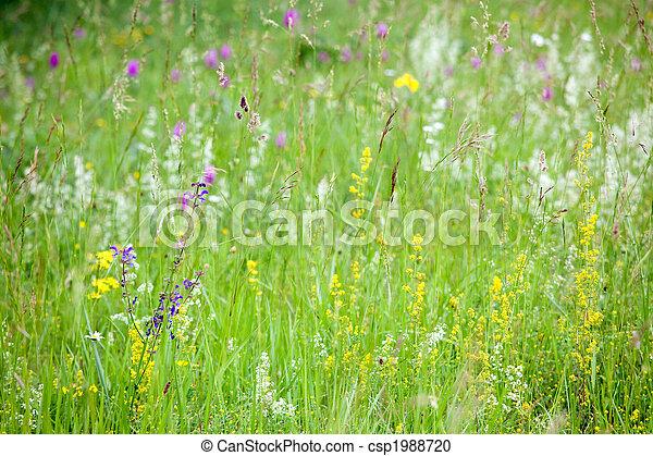 spring flowers in wild meadow - csp1988720